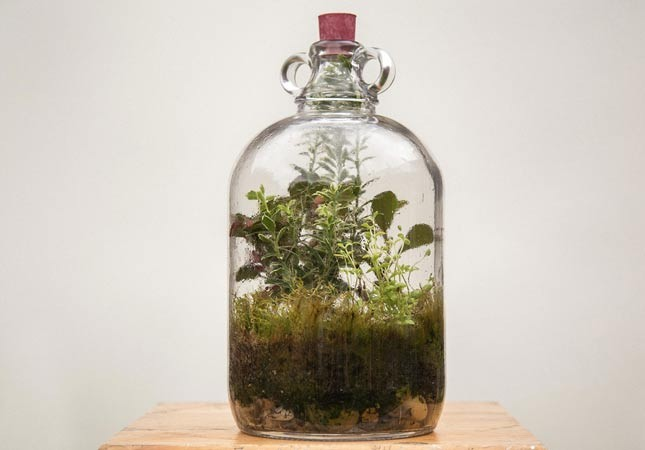 Terrarium Garden under glass workshop