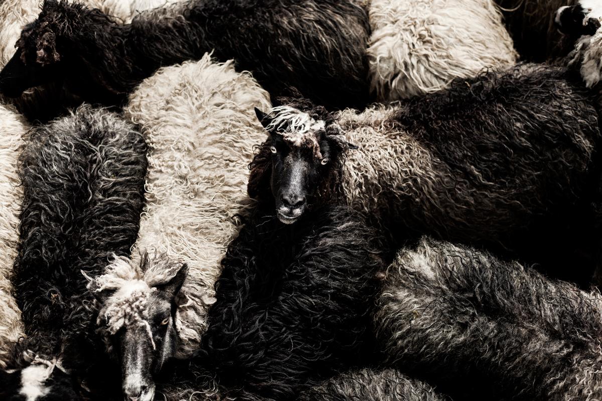 heals-the-organic-sheep-fur-rugs-throws-1