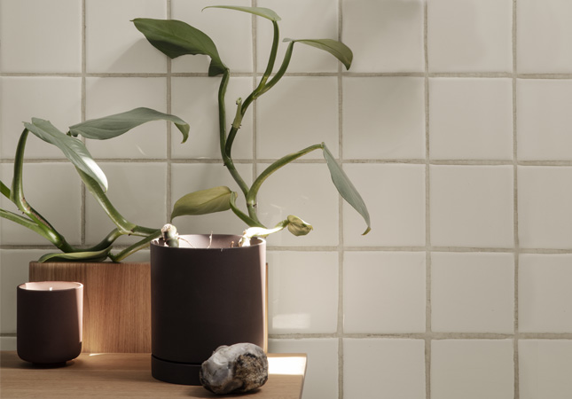 Plants in a rental property Featured Image