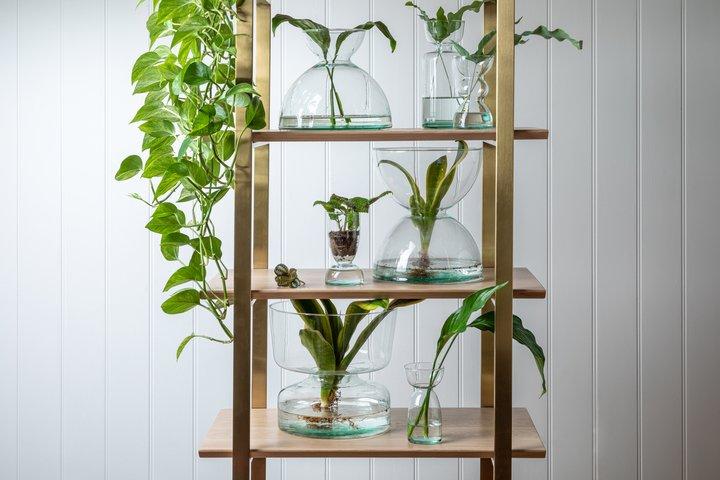Canopy vases by LSA International
