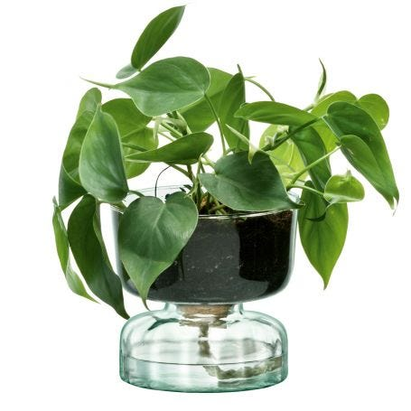 Canopy Self Watering Planter Small