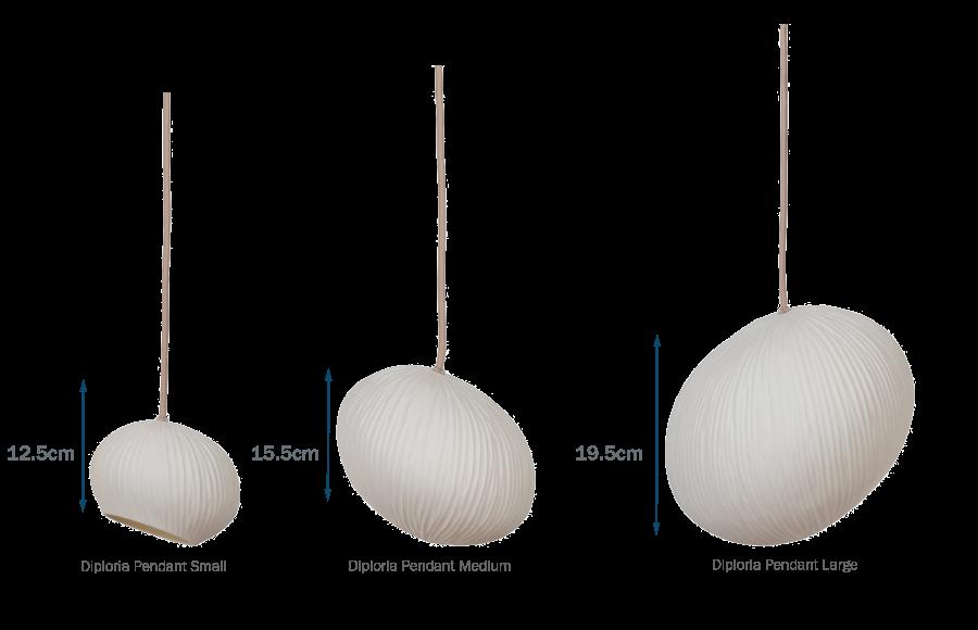 Diploria Sphere Chandelier